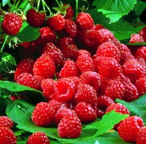 raspberries2