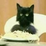 kittylikesspaghetti1